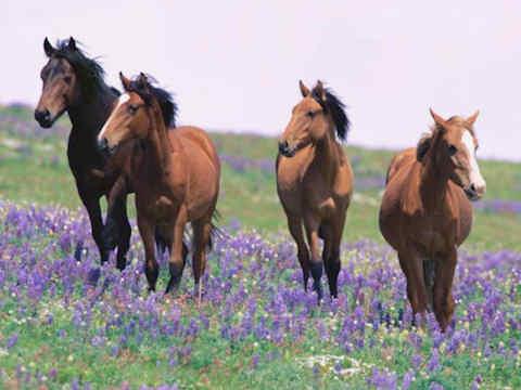 paarden van de evolutietheorie.urgent.be