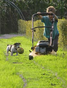 grasmaaien van tuinadvies.be